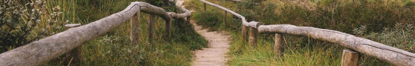 Picture of path with rail borders
