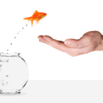 Goldfish jumping into hand