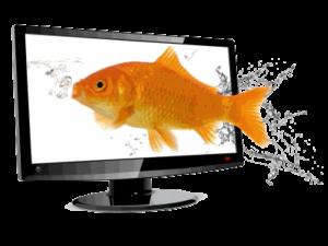 Goldfish watching TV