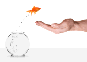 Picture of goldfish jumping from bowl into hand