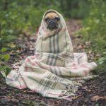 Dog Wrappedn in Blanket